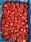 工�S直供�r果速�隼�雒朗�三草莓10kg/箱散�b果汁果�u原料供��